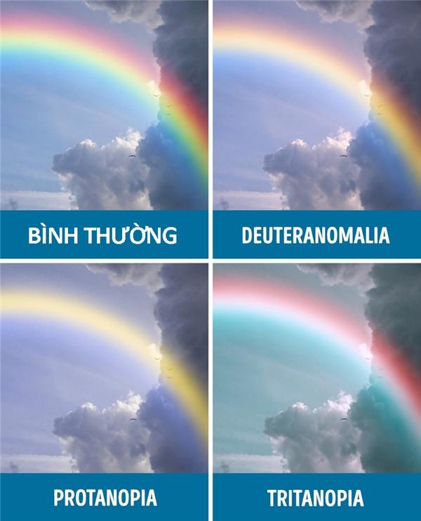 Người bị mù màu nhìn thấy thế giới có màu gì?