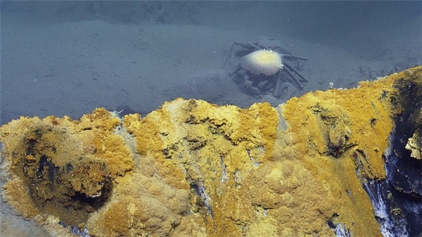 Dưới đáy hố nước có rất nhiều xác sinh vật được bảo toàn nguyên vẹn. (Ảnh:Daily Mail)