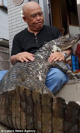 ...và kể từ đó chú cá sấu luôn gắn liền vớiông không rời.