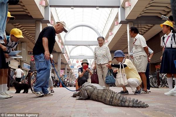 Lạ đời tình bạn hơn 30 năm giữa cụ già và cá sấu ở Nhật Bản