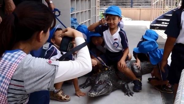 Ông Nobumitsu còn dẫn chú cá sấu tới trường mẫu giáo gần nhà để các em nhỏ có thể chơi đùa hoặc chụp ảnh.