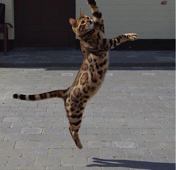 Và khiêu vũ trên không.