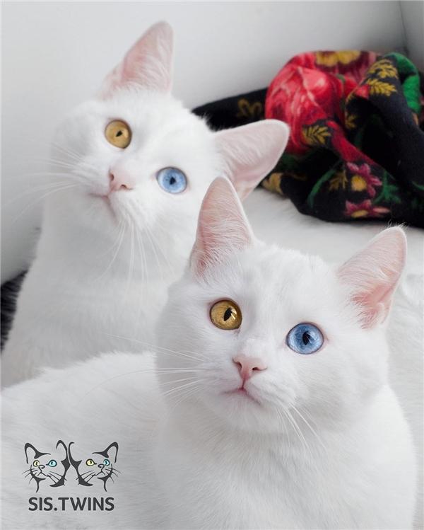Tài khoảng Sis Twins hiện đã có hơn 79.800 người theo dõi. (Ảnh: Internet)