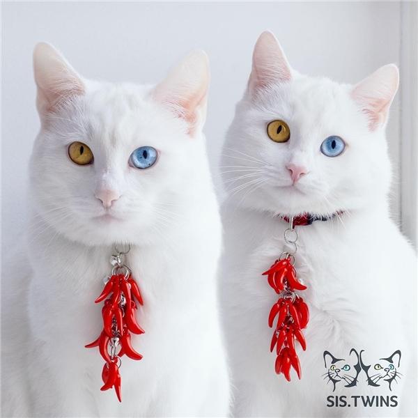 Thực tế, tỉ lệ để có được một chú mèo hai màu mắt chỉ là 1 trên 1.000.000. (Ảnh: Internet)