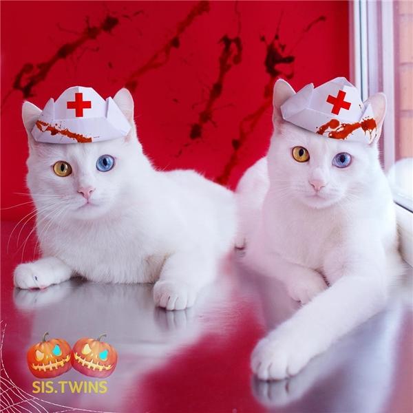 Ngày Halloween của cặp mèo song sinh. (Ảnh: Internet)