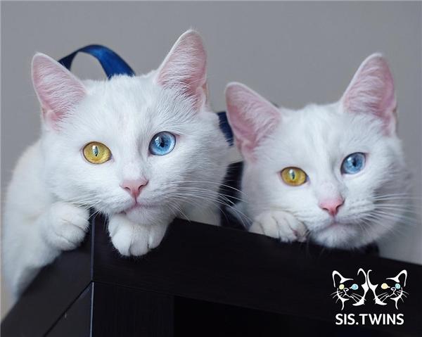 Hai đôi mắt như những viên ngọc sáng lấp lánh. (Ảnh: Internet)