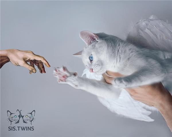 Người chủ tốn nhiều công sức cho những bức ảnh nghệ thuật của 2 cô mèo này. (Ảnh: Internet)
