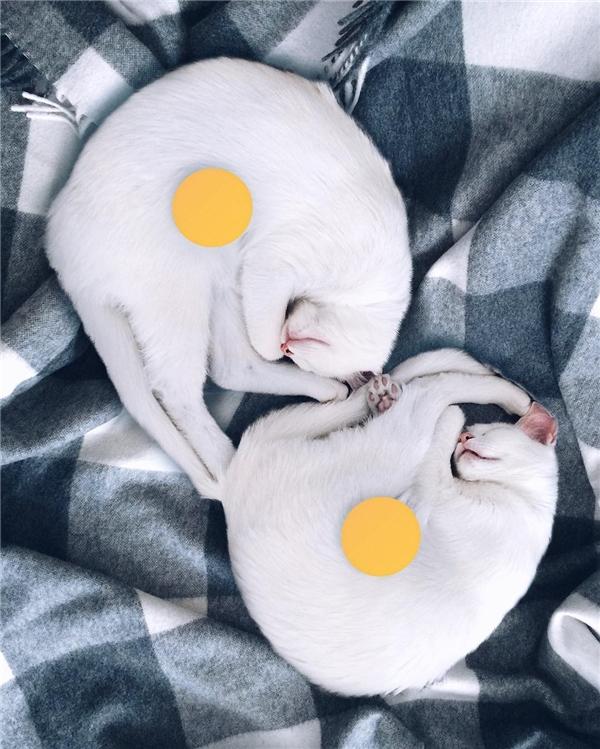 Ngủ cùng nhau. (Ảnh: Internet)