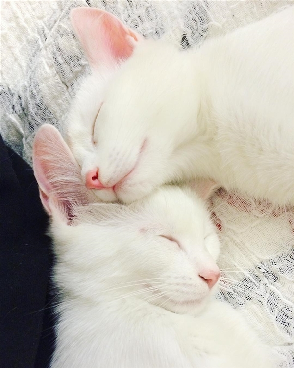 Ngay cả lúc ngủ cũng đẹp. (Ảnh: Internet)