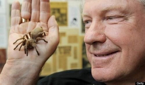 Ông Nick Le Souef đã nhốt mình trong phòng bằng kính với 300 con nhện trong vòng ba tuần để làm từ thiện.