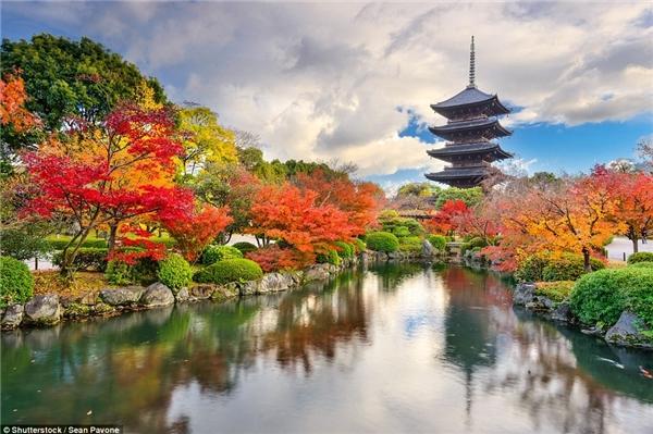 Chùa Toji tại Tokyo, Nhật Bản đẹp như tranh vẽ với những tán cây lá đỏ rực rỡ xung quanh.