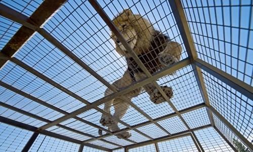 Vườn thú được lấyý tưởng từ khẩu hiệu Bảo vệ các loài động vật, nơi mà những con thú được tự do đi lại.