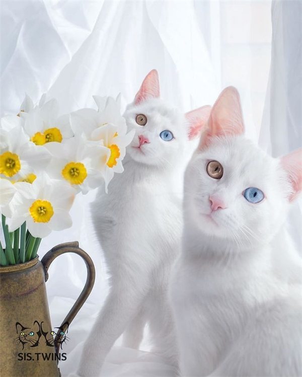 Iriss và Abyss, cặp sinh đôi gây ấn tượng nhờ mắt hai màu cuốn hút cùng nắm tay nhau trên đấu trường nhan sắc.