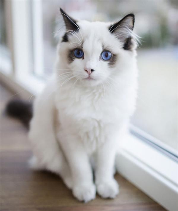 Đôi mắt ấy sẽ hát anhnghe về đại dương xanh.