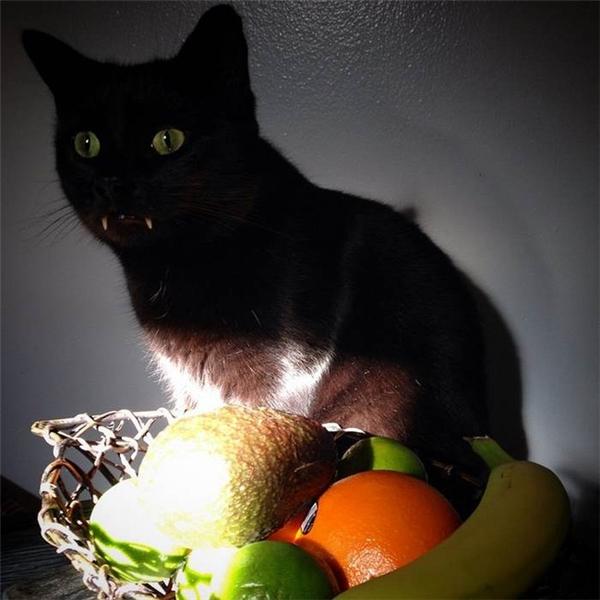 """Phát hiện """"mèo dracula"""" với hàm răng sắc nhọn như ma cà rồng"""