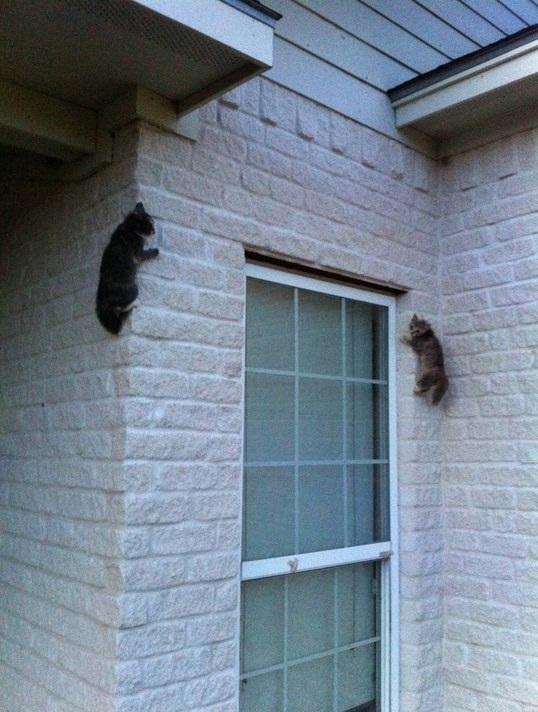 Có ngon thì bò sang bờ tường bên đây xem nào!(Ảnh: BuzzFeed)