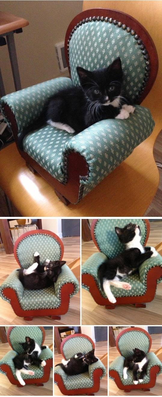Khi boss thử ghế mới...(Ảnh: BuzzFeed)