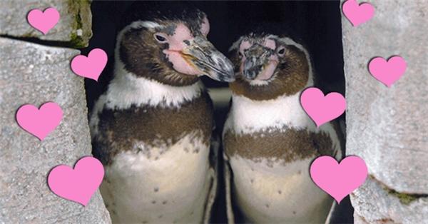 Lễ kỉ niệm 10 năm yêu nhau của đôi tình nhân bé bỏng.