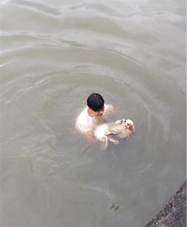 Anh chàng đã lội xuống dòng nước để cứu chú chó.