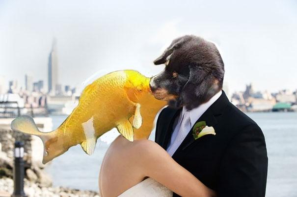 Xin giới thiệu phần tiếp theo của truyện nàng tiên cá, lần này nàng hóa thành nửa người nửa cá,kết hôn với hoàng tử cún và sống hạnh phúc hết đời.