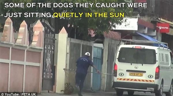 Một người bắt chó đang nhắm vào một con chó nằm bên đường.(Ảnh cắt từ clip)