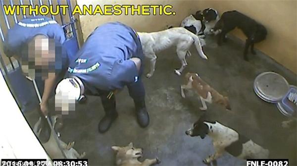 Đoạn clip quay lại cảnh những con chó tội nghiệp bị đầu độc.(Ảnh cắt từ clip)