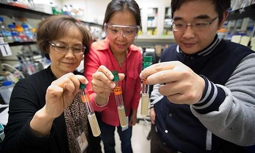 Các nhà khoa học tại NREL đang cầm ống nghiệm chứa vi khuẩn Clostridium thermocellum. Ảnh: Amy Glickson.