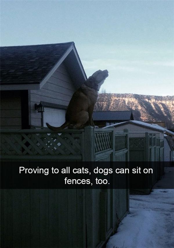 Boss nhà tui thì cứ thích chứng tỏ với lũ mèo trong khu phố để làm gì không biết.(Ảnh: Internet)