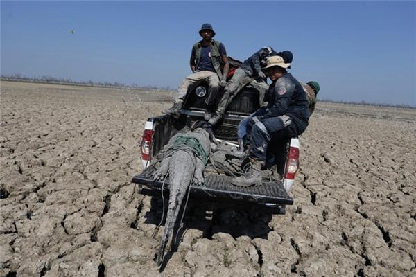 Tình trạng hạn hán đang vô cùng nguy cấp anh hưởng đến tính mạng và sinh hoạt của các loài động vật và người dân khu vực này.