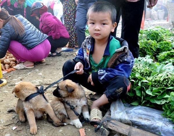 Hình ảnh về cậu bé nghèo và chó cưng khiến người xem ám ảnh.