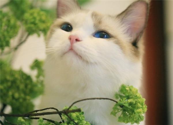 BéGhost có đôi mắt xanh thẫm cựckì thu hút.