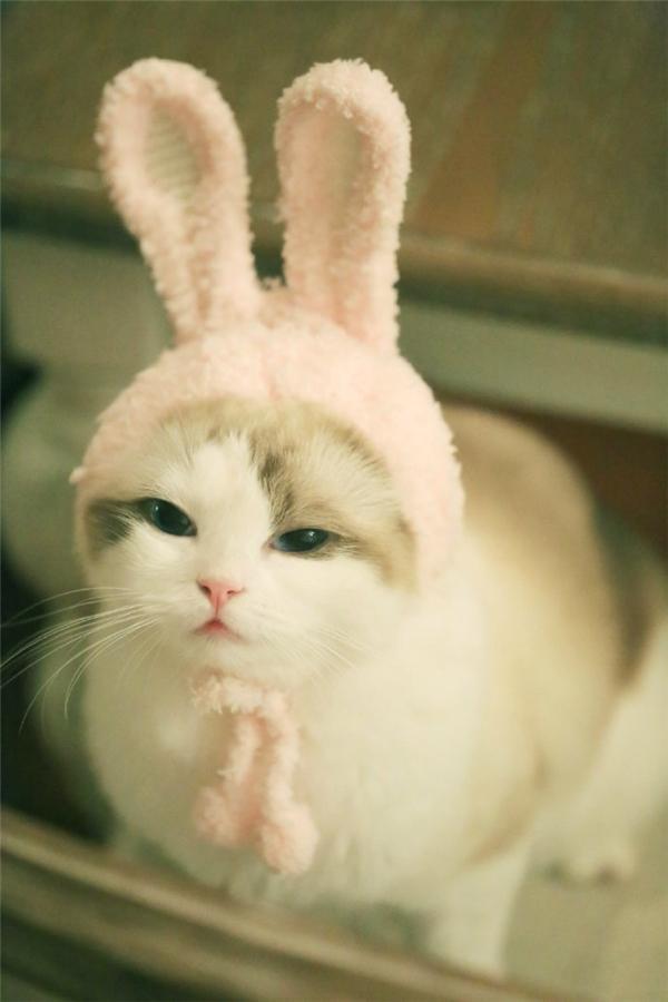 Nhiều lúc bé cũng thích cosplay thành thỏ hồng nhí nhố.