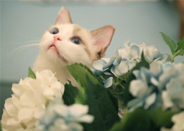"""Vừa thích giả nữ, lại rất yêu hoa, thế nhưng bé Ghost là """"trai thẳng"""" đàng hoàng đấy nhé."""