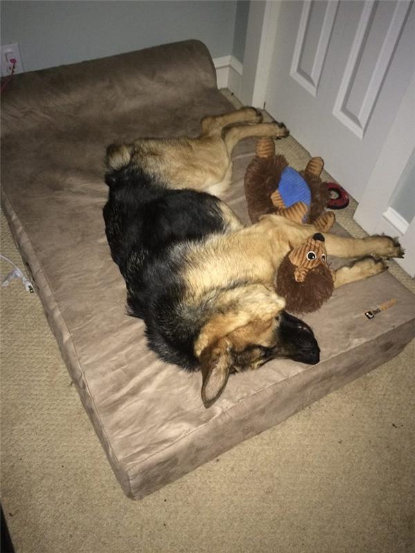 Ban đầu, người ta tưởng rằng chú chó này bị gù là do sống quá lâu trong một ống cống.