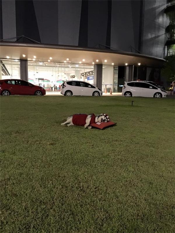 Yariscó thể ngủ ở mọi địa hình.