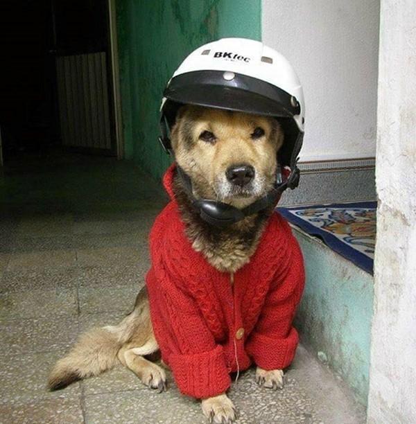 Các em cún cưng cũng phải diện đồấm từ đầu đến... đít luôn nhé mọi người. (Ảnh: Internet)