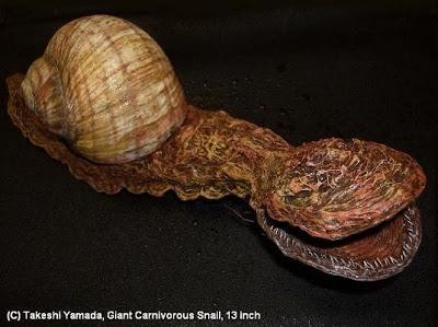 Mô hình ốc khổng lồ với chiều dài là 32,5 cm.