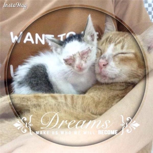 Không phụ lòng của Trinh và mẹ, chú mèo Mi ngày một khỏe mạnh dần.