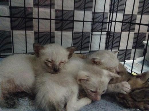 Trinh cùng mẹ hiện đang nhận nuôi 25 chú mèo lang thang tại nhà.