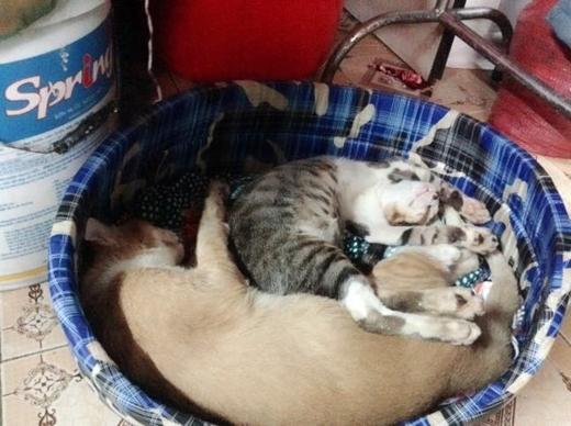 Trinh và mẹ đã duy trì công việc chăm sóc, cứu trợ những chú mèo được 6 năm.