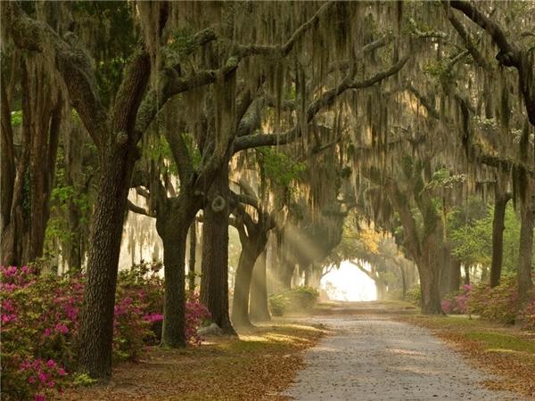 Nghĩa địa Bonaventure, Savannah, Georgia nổi tiếng khi được đưa vào cuốn tiểu thuyết Midnight in the Garden of Good and Evil của John Berendt năm 1994. Sau đó chuyển thể thành phim do minh tinh Clint Eastwood đạo diễn. Ảnh: Alamy.