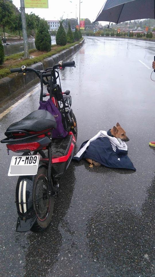 Nữ sinh dầm mưa che áo khoác cho chú chó bị thương giữa cái rét 17 độ