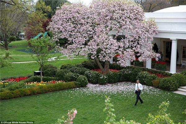 Tổng thống Obama dạo bước trong khu vườn bên trong Nhà Trắng.