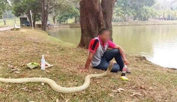 Dù đang làm gì, đang ở đâu anh và nàng rắn dài hơn 3 mét này vẫn đồng hành, quấn quít cùng với nhau.
