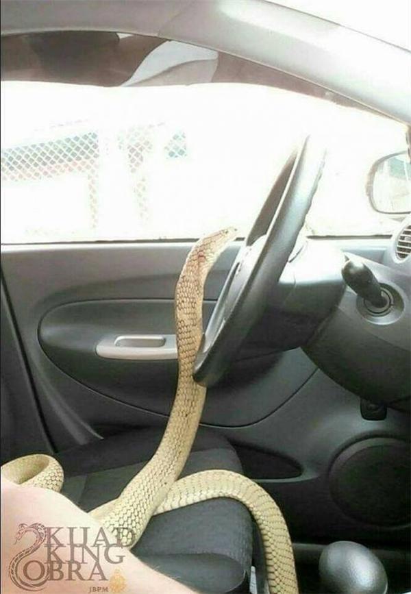 Ngay từ cái nhìn đầu tiên, anh đã có một linh tính rằng bạn gái đã khuất của mình... đầu thai vào nàng rắn này.