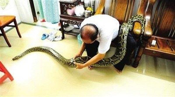 Hai cụ thả cho chú trăn tự do bò trườn trong nhà.(Ảnh: China News)