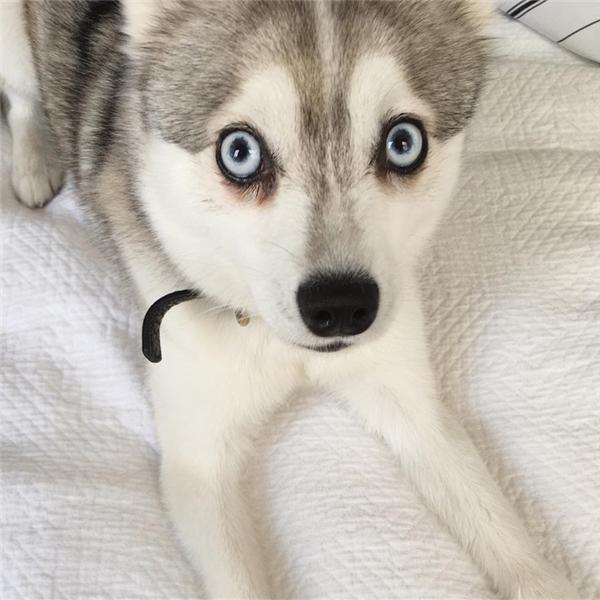 Dù tính tình hiền lành nhưng với cặp mắt kẻ viền khá đậm, những ai không biết đều nghĩ rằng Luna khá dữ tợn.