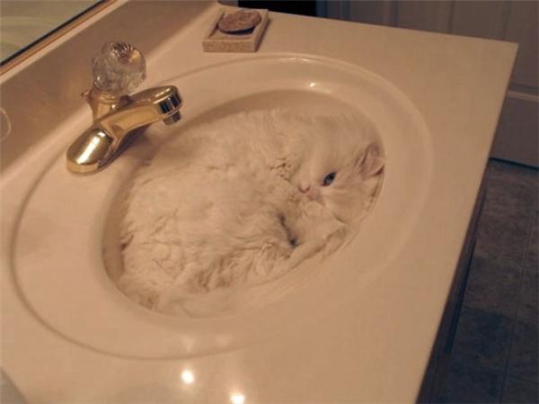 Tôi tỉnh dậy, bước vào trong nhà tắm, và.... ừm... đợi tôi tí...
