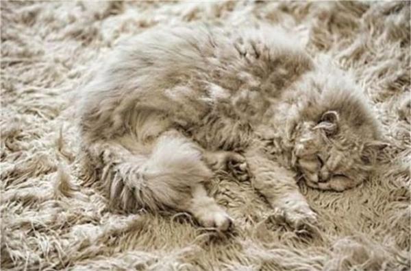 Ước gì tui được trải phẳng người trên tấm thảm này.