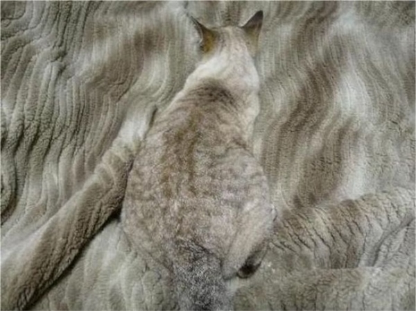 Tôi chắc hẳn họ đang phân vân xem đây là cái chăn hay con mèo, he he.
